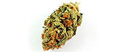 Bruce Banner The Kind Room Medical Marijuana Dispensary in Denver on Broadway